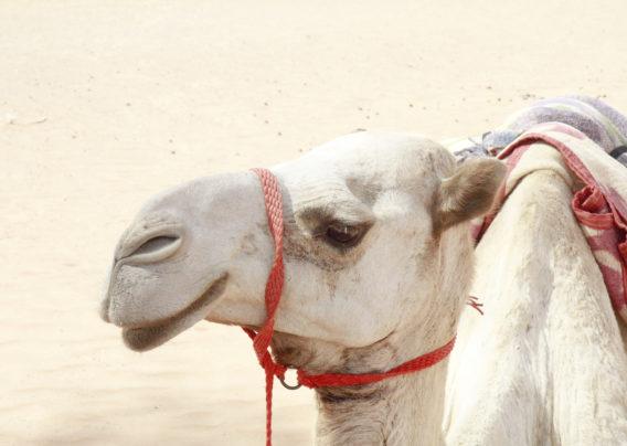 Oman travel guide - NECTAR & PULSE