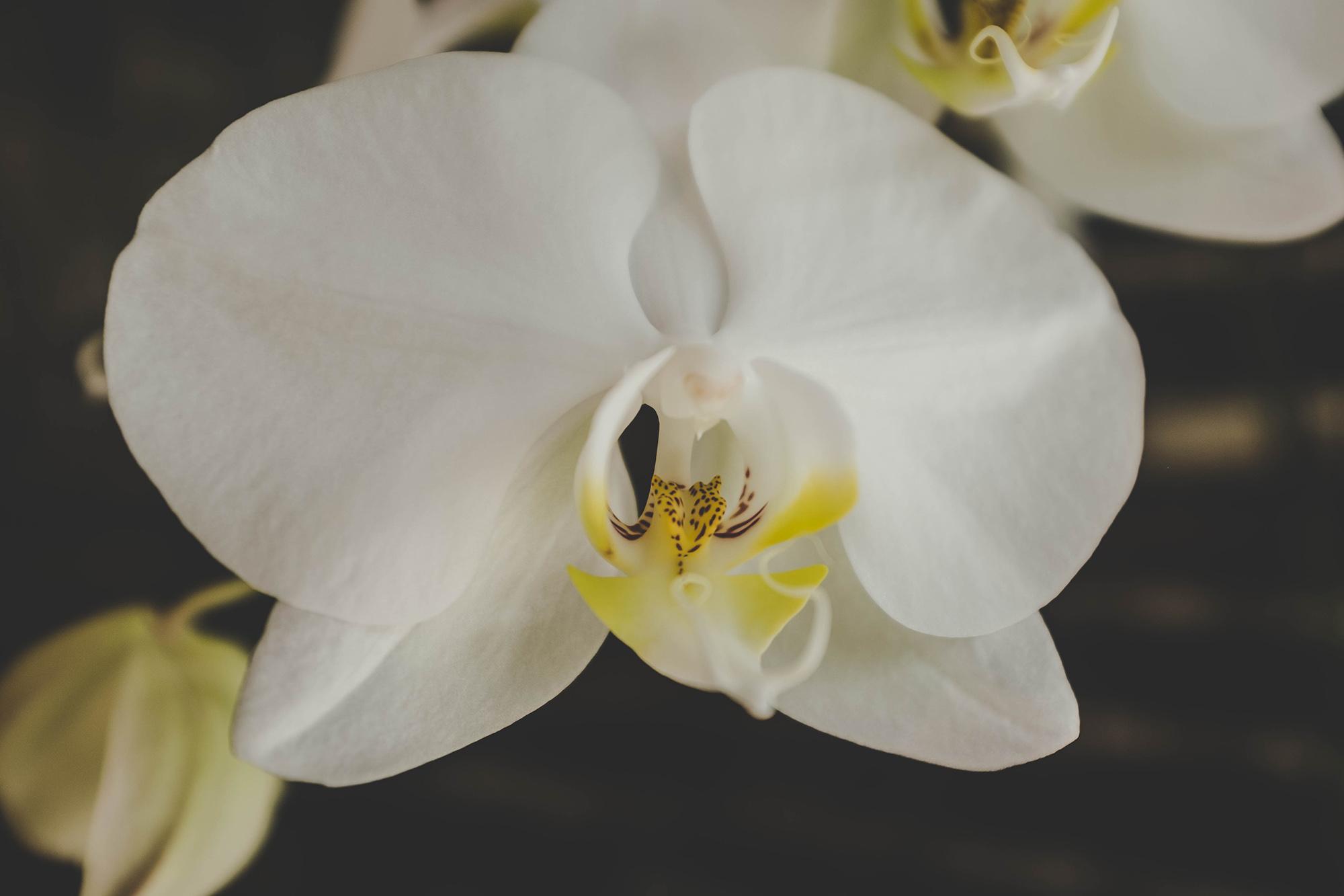2017-04-Alila-Villas-Uluwatu - alila-villas-uluwatu-bali-nectarandpulse-flower-30.jpg