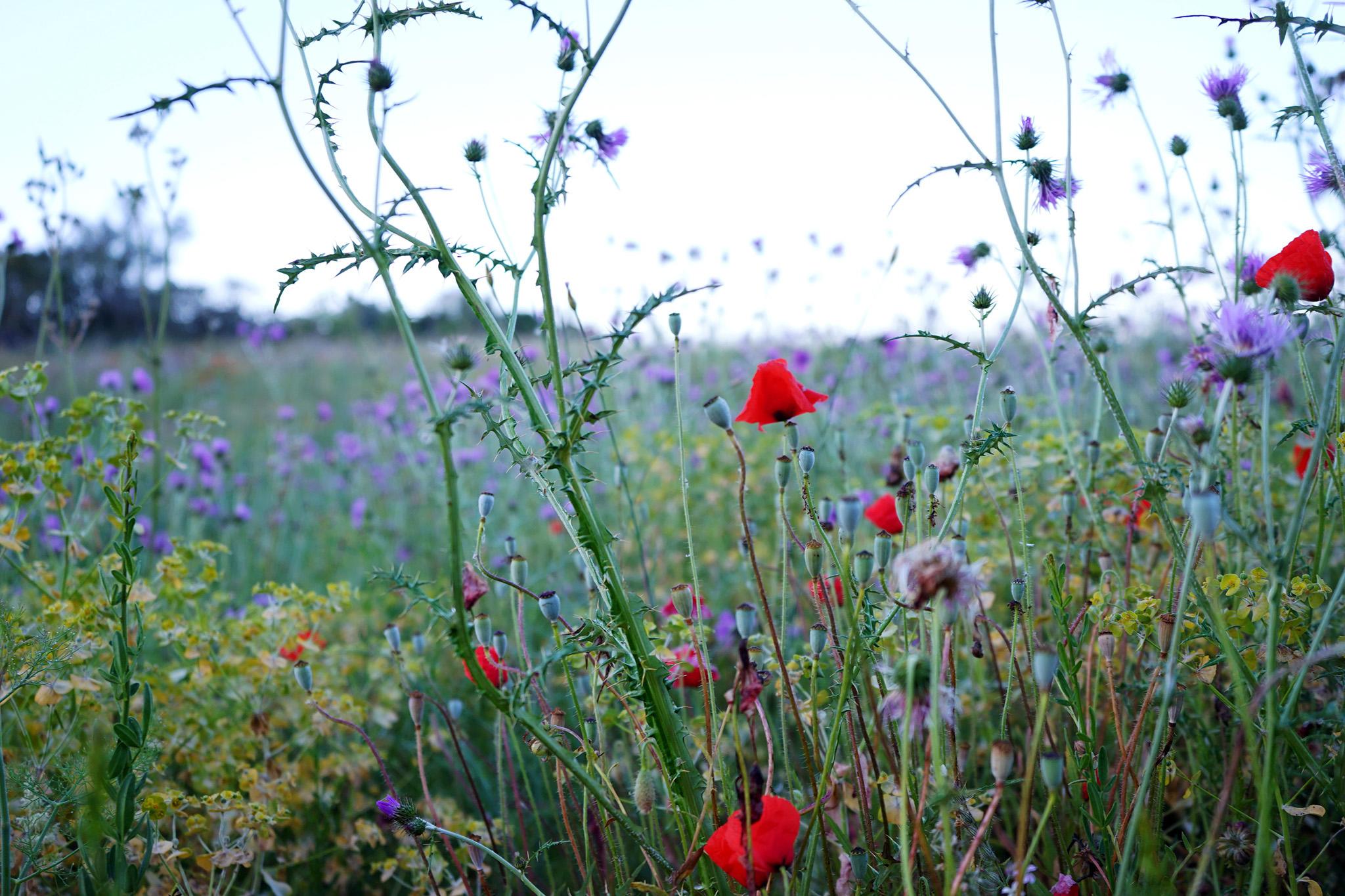 2017-04-Casa-Arte-Bad-Gastein - casa-arte-algarve-nectarandpulse-flowers-8.jpg